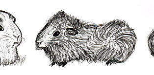 Short Story: Charlotte is a Guinea Pig's Name