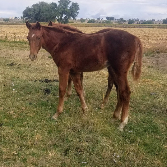 Angel & Chino Filly 2018