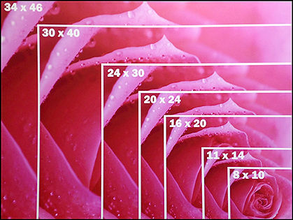 canvas-sizes-rose .jpg