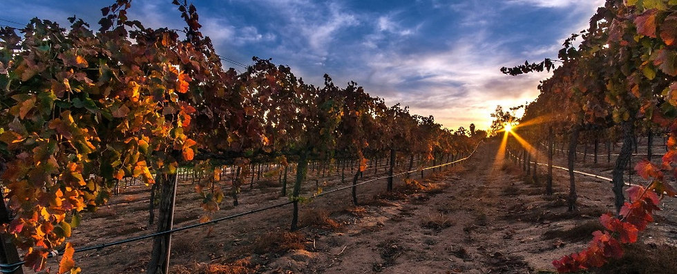 vineyard2_edited.jpg
