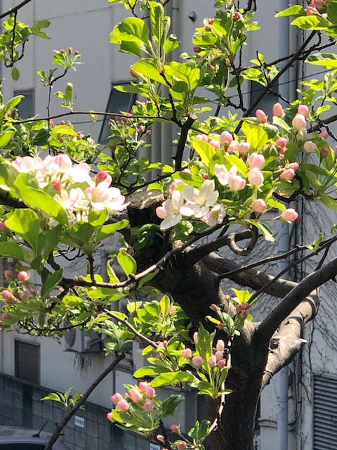 4月6日今日は暖かく、お花見日和ですね