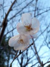 咲き始めました~(*´▽`)
