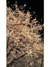 夜桜満開(*´ー`*)