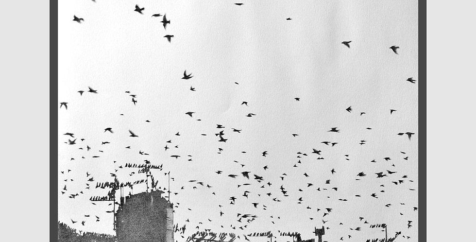 BIRDS 03