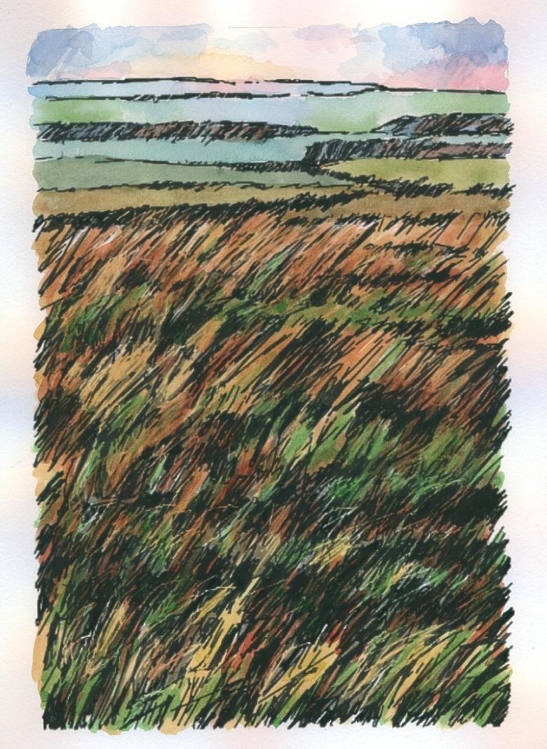 Northumbrian Moorland 2