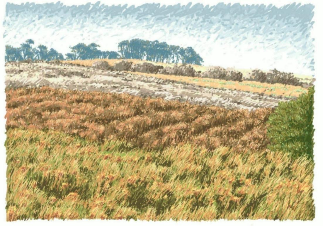 Northumbrian Moorland