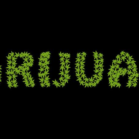 Da dove proviene il nome Marijuana per la Cannabis ?
