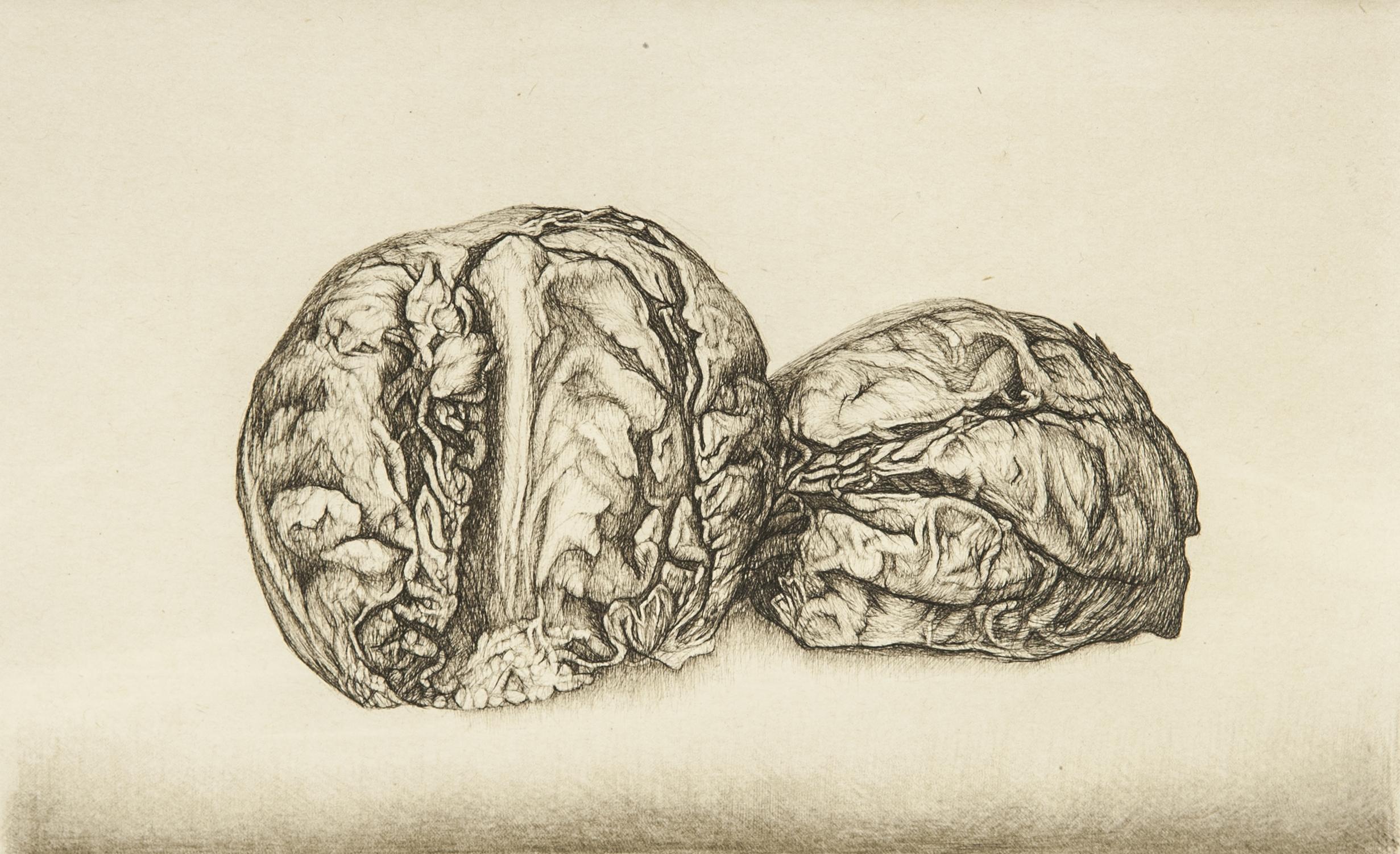 Cécile Reims, Autour d'Anatomies végétales, 2006-2007 Estampe sur papier vélin de Rives, 15,9 x 25,8