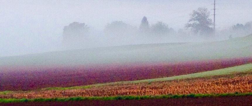 Anglikon bei Nebel