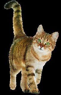 cat-club-cat.png