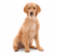 86-861113_harringtons-dog-dog-sitting-tr