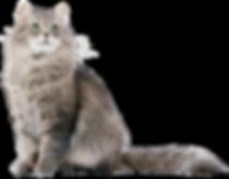 22473-5-siberian-cat.png