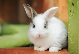 rabbit-475261_0.jpg