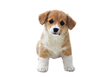 puppy-png-hd-so-cute-puppies-image-puppy