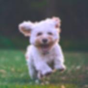 BODY_Small Dogs_Photo Credit Joe Caione.