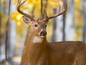 Deer attractant pellets  Green Dot Bioplastics