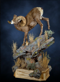 Natural Instincs Taxidermy