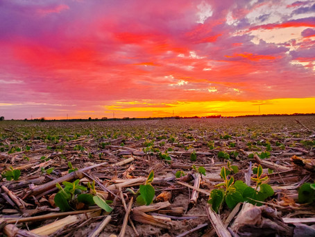 The Importance of Residual Herbicides