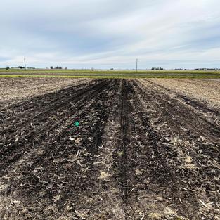 Chisel plow in Long Term Tillage