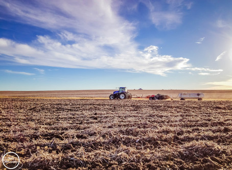 Nitrogen Rates and Planning for 2021