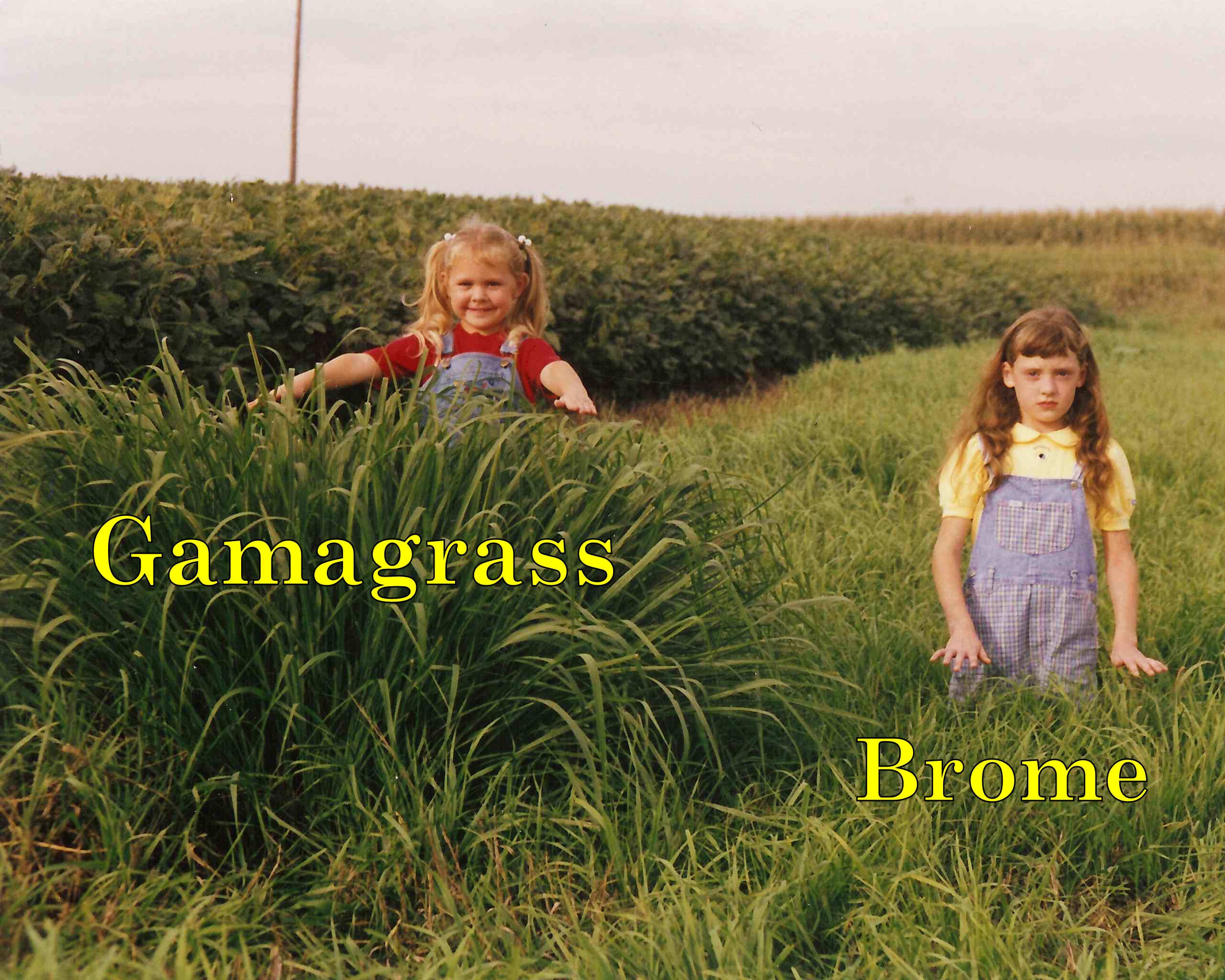 gg vs brome l&r wet