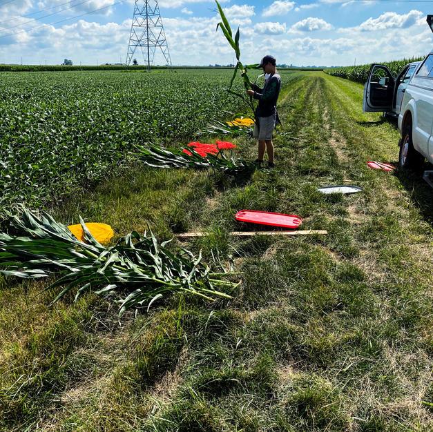 Plant biomass samples 2020