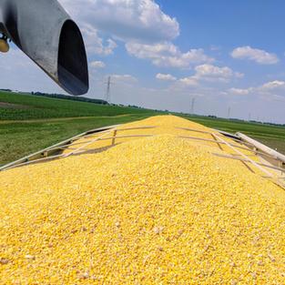 Full grain cart load