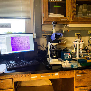 Cell counting setup