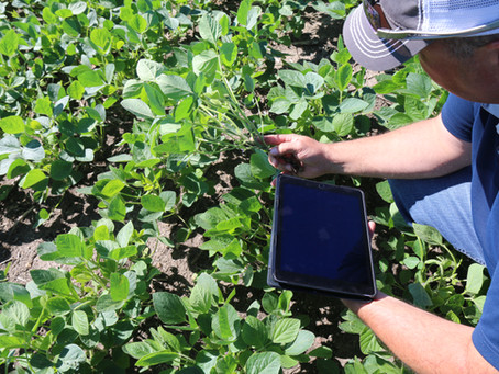 Plant your Soybeans Earlier in 2021