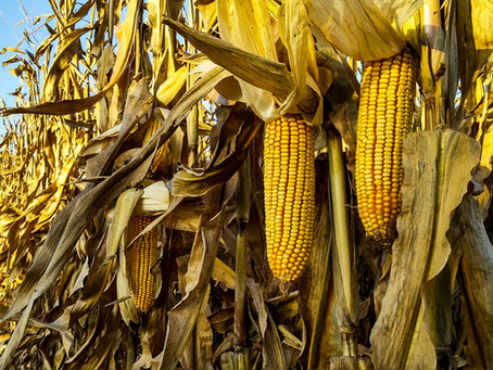 Plant Health is more than just Yield