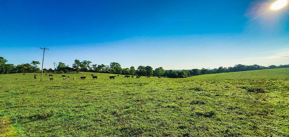 kentucky_cattle_farm