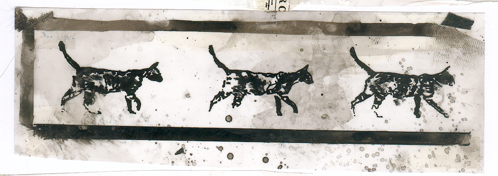 NewWorld-Cats