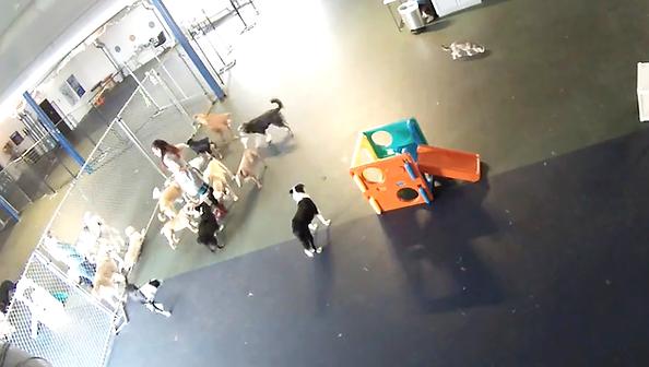 Big Paws Crew Webcam