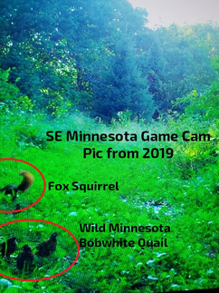 Twin Cities Metro Quail Forever Banquet & Registration Details