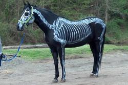 Skeletal System for Visitor's Day