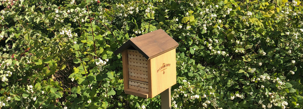Alpine Mason Bee House