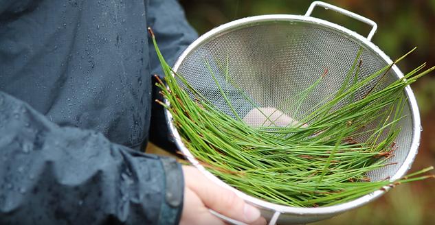 Grain-to-Grass_Madeleine Nolan_Lucy Burn