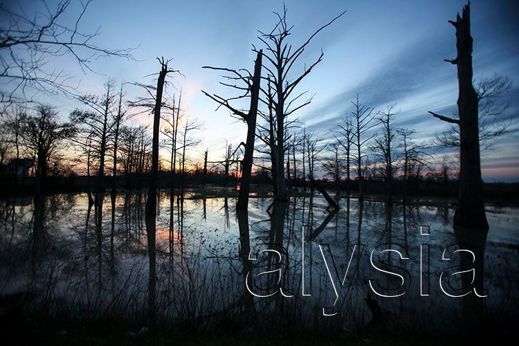 bayou+web