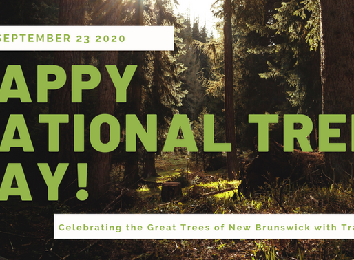 National Tree Day: Q&A with Tracy Glynn/Journée Nationale de l'Arbre : Q&R avec Tracy Glynn