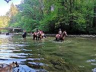 chevaux baignade.jpg