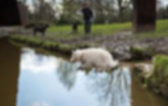 Dog walking in Crystal Palace Park