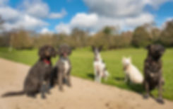 Dog trainer behaviourist