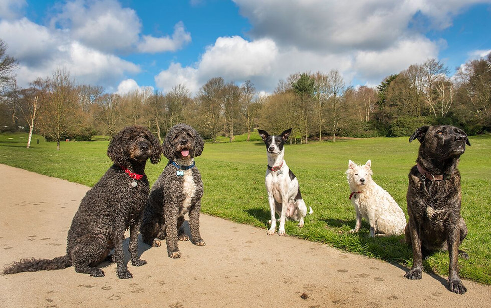 Dog trainer behaviourist