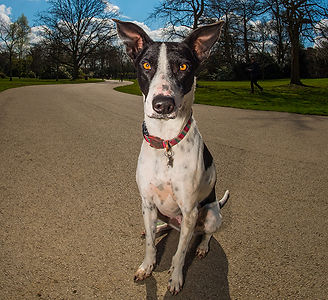The Dog Guru London