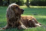 The Dog Guru