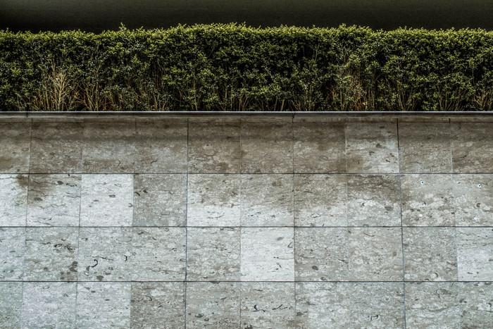 DSC_0880 hedge.jpg
