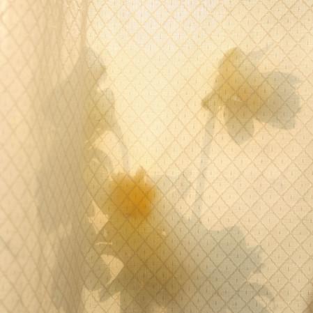 flower window_.jpg
