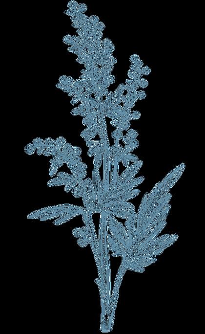 Bilder-pflanzen-1.png