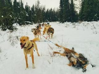 Rookie Iditarod Training: Log 3