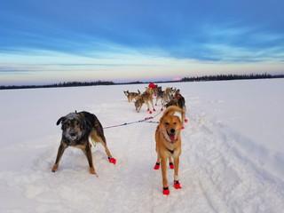 Rookie Iditarod: Nikolai - Takotna